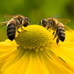 Three Bee Products That Make Fantastic Health Supplements