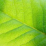 Study Finds That Moringa Oleifera Can Help Treat Diabetes