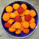 Salmonberries