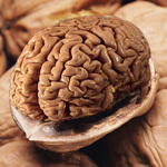 Walnut Brain