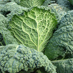 Kale: One of the World's Most Nutritious Vegetables